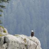 Grizzly Bears: Katmai National Park, Alaska