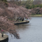Washington D.C. Cherry Blossom Guided Sightseeing Tour