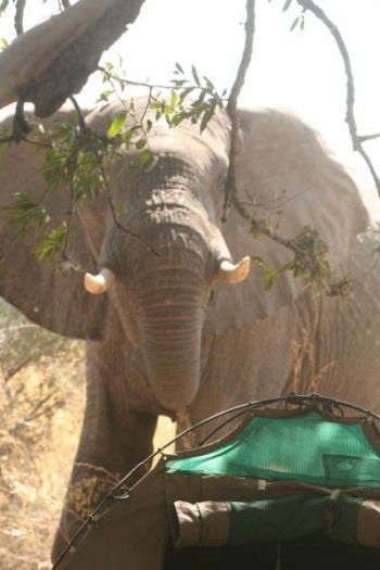 Safari In Botswana's Okavango And Chobe