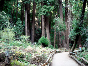 The Open Spaces Of California's Marin County