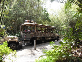 Family Trip To Disney's Animal Kingdom