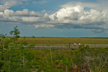 Driving Main Park Road, Everglades National Park