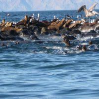 Sea Of Cortez Tour
